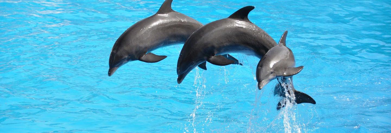 Dolphinland Trip Antalya