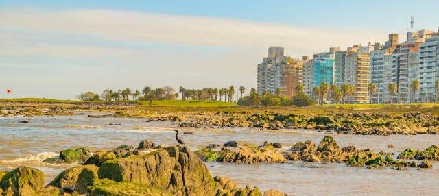 Free tour por Punta Carretas