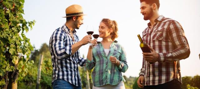 Tour de bodegas y degustación de vino