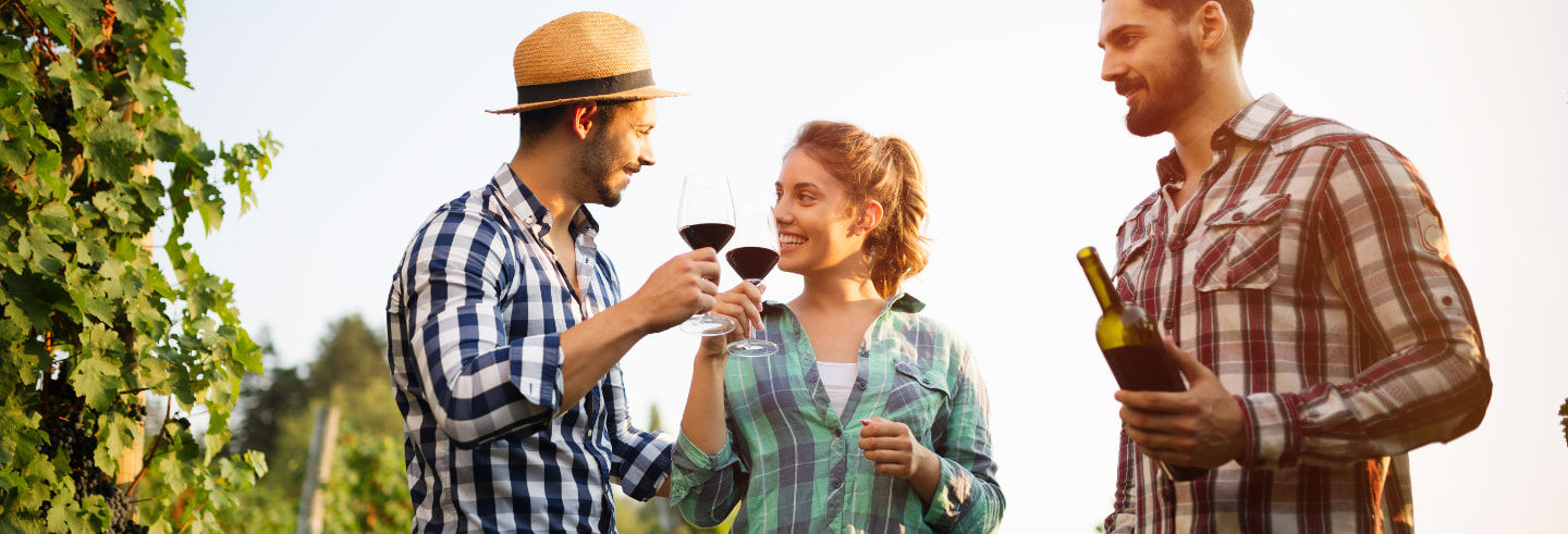 Tour de adegas e degustação de vinho