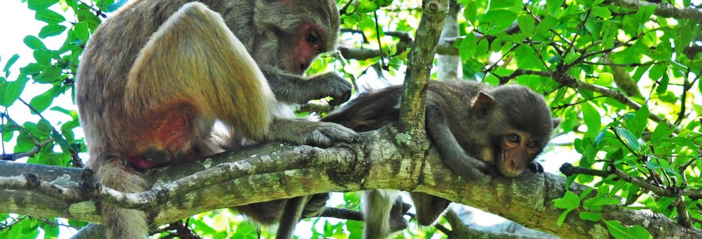 Excursión a la Isla de los Monos y Bahía Nha Phu
