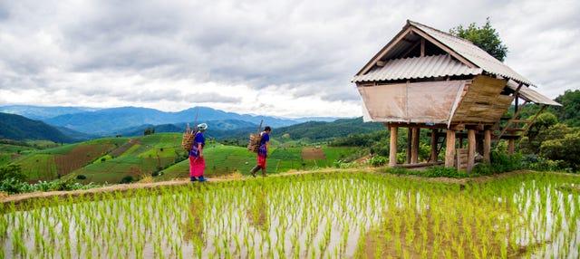 Trekking por los arrozales de Sapa