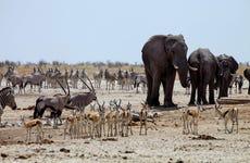 Excursión al Parque Nacional Chobe