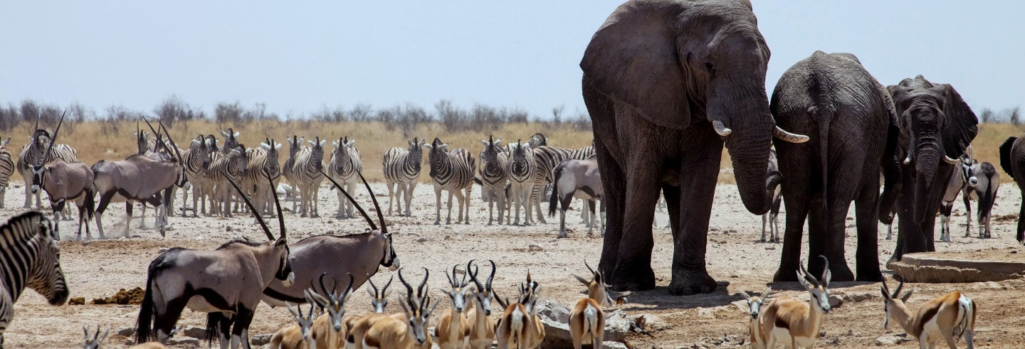 Chobe National Park Trip from Victoria Falls