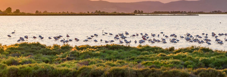 Parque Natural do Delta do Ebro