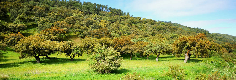 Sierra de Aracena National Park